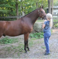 sandy rabinowitz and horse
